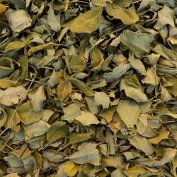 Moringa bladeren gesneden